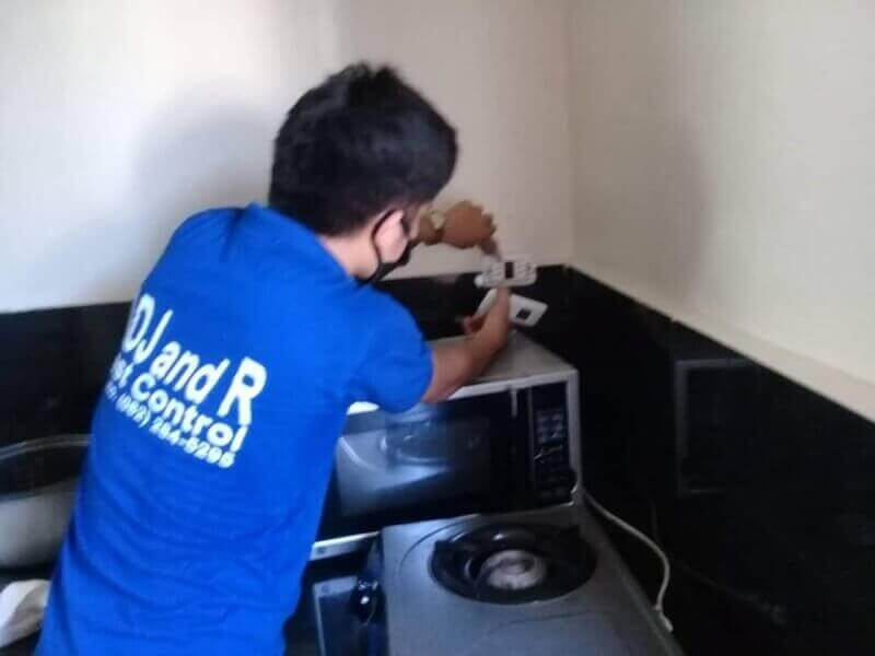Cockroach Control in Davao