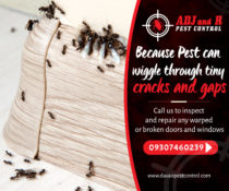 Because Pest can wiggle through tiny cracks and gaps, call us to inspect and rep…