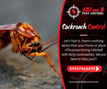 Cockroach Control  Let's face it, there's nothing worse than your home or place …