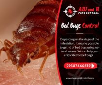 Bed Bugs Control  Depending on the stage of the infestation, it may be possible …