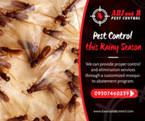 Flying Termites: Pest Control this Rainy Season  We can provide proper control a…