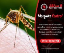 Mosquitoes are annoying pests that often carry of dangerous diseases, such as De…