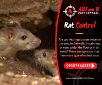 Rat Control  Are you hearing strange noises in the attic, in the walls, in cabin…