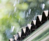 Pest Control this Rainy Season in Davao City