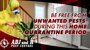 Be free from unwanted pests during this home quarantine period…  Address: ADJ&…