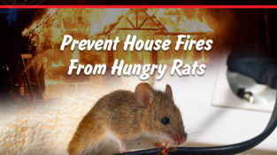 In Observance of Fire Prevention Month.  Prevent House Fires From Hungry Rats  F…