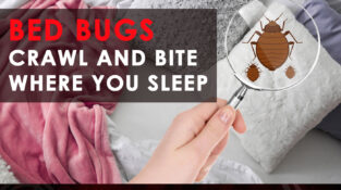 Don't Let the Bed Bugs Bite!!  No BED BUGS, No WORRIES  Call us today for f…