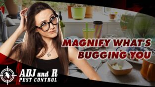 Magnify What's Bugging you  Homeowners who are interested in pest managemen…