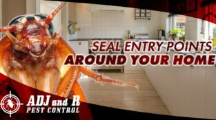 SEAL ENTRY POINTS AROUND YOUR HOME  Head outdoors and look for entry points arou…