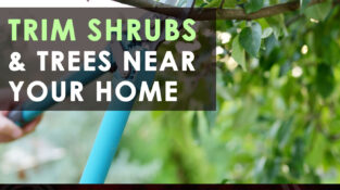 Trim shrubs and trees near your home  Shrubs and trees serve as shelter for many…
