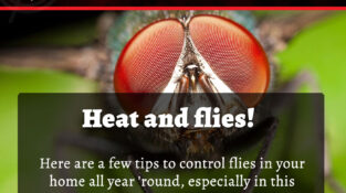 Heat and flies! Here are a few tips to control flies in your home all year &#039…