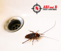 "Some cockroaches are called ""water bugs"" because they prefer moist places like y…"