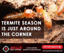 Termite season is just around the corner and we want to make sure your home is p…