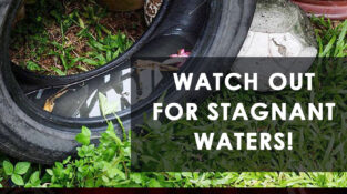 Watch out for stagnant waters!   This leads to providing the whole neighborhood…