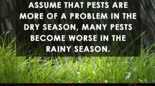 While many people assume that pests are more of a problem in the dry season, man…