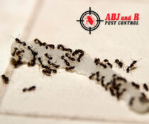Ants are attracted to protein and sweet substances. To prevent ants from invadin…