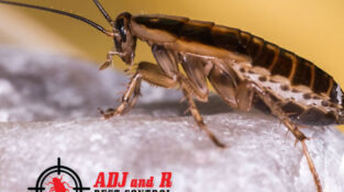 Cockroaches eat anything and everything, and can destroy clothes, fabrics, rugs …