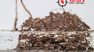 'Tis the season for termites in your house. Keep your eyes open for them.  Addre…