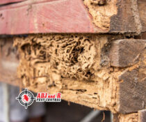 Ever wondered what termites can do to your homes foundation? check out the pictu…