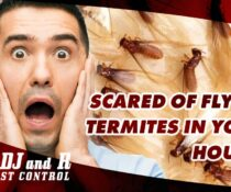 Scared of flying termites in your house?  Call us at NOW for free inspection.  A…
