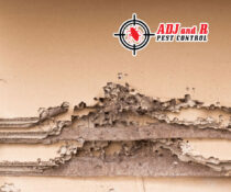 Termites are attracted to moisture and with the rainy days we've had in Dav…