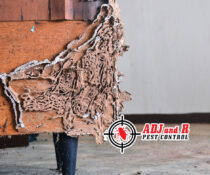 This is what can happen if termites in your house are left untreated!  Your look…