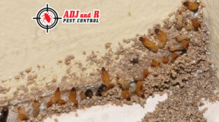 Damage caused by termites infestation can be a big burden on your pockets. To av…