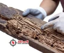 If you see tunnels in your wood, that could mean you have a termite infestation….