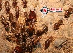Subterranean Termites can be very destructive. No matter how old your home is or…