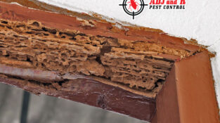 Termites can wreak havoc on homes. Good thing we offer top-notch inspections and…