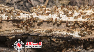 Treatment options for termites vary. We have multiple methods which can accommod…