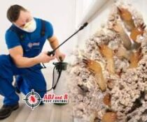 Termite inspections of your properties by a licensed pest controller are importa…