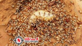 Termites are able to cause so much damage because they never sleep. In fact, the…