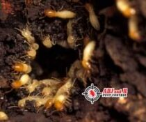 Got termites?   Fumigation works best, but it's not for everyone and every house…