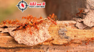 No matter how old or new your home is or where it is located, it is susceptible to termites and ants