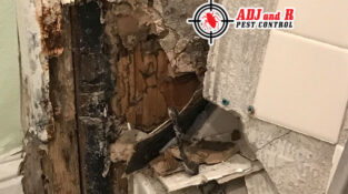 Do you need a termite Inspection?