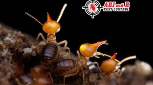 Termite soldiers and workers don't have eyesight as they don't need it!