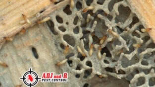Did you know that 1 in 3 homes in Davao City will be affected by termites within the economic life of the structure?
