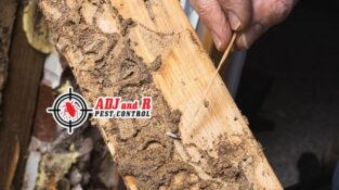 Termite inspections of your properties by a expert and licensed controller are essential