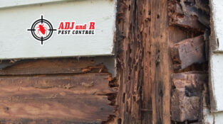 High moisture levels and the warmer weather are creating ideal conditions for timber termite attack