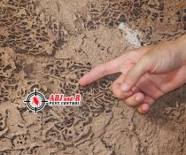 Termites are actually among the hardest insects to get rid of…