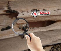 Treating your house for termite doesn't have to be a headache!