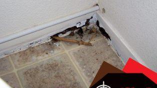 Termites just love water