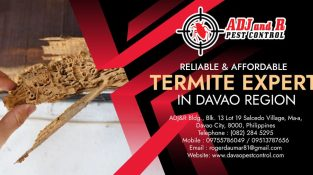 Do you know how to spot a termite infestation?