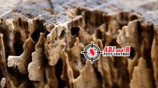 Termites/Anay can be more than just annoying