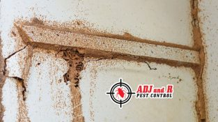 Termites are incredibly destructive…
