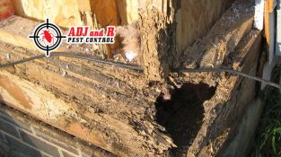 Termites can enter your home from the bottom