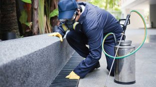 Why Should I Consider Consulting Termite/anay Experts?