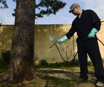 Why Does Adj and R Pest Control Worth the Money?