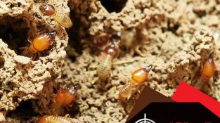 Termites/anay may really…